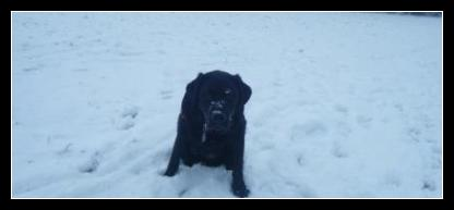 Kratos the black labrador puppy sitting in the snow.